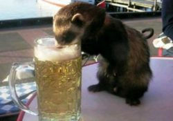 Интересные факты про пиво