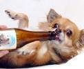 Необычные сорта пива