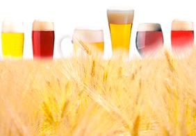 Недостатка пивоваренного ячменя не ожидается