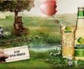 Яблочный сидр набирает популярность как в Украине так и в мире