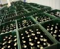 Производство пива в Латвии