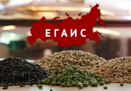ЕГАИС пока так и «не засветил» теневой рынок пива в России