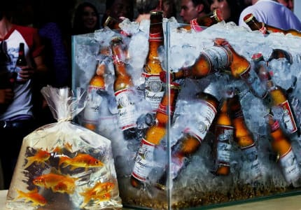 hranenie piva