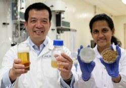 Varit bolshe piva s menshimi zatratami predlozhili uchenyie iz Singapura