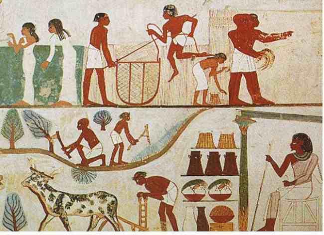 Пиво в истории. Выращивание ячменя в древности